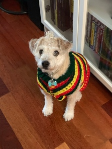 A small white and tan dog wearing a striped sweater.